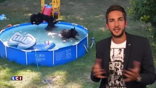 ZAPNET hebdo - Les vidéos de la rentrée !