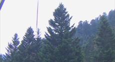 Le 13 heures du 20 octobre 2014 : Le sapin de No�de Strasbourg en route pour la place Kl�r - 1359.7480731811522