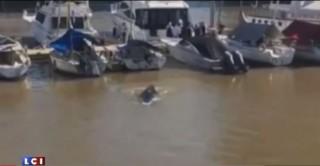 Buenos Aires : une petite baleine se perd dans le port