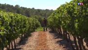 Les viticulteurs ouvrent leurs caves : l'œnotourisme en plein essor