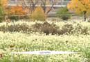 Québec : l'agriculture envahit les toits de Montréal