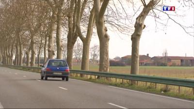 Le 13 heures du 9 mars 2015 : Faut-il abattre les platanes au bord des routes ? - 1245.37