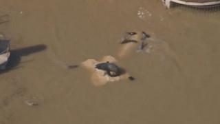 Intempéries : au Marineland d'Antibes, les animaux nagent dans une eau boueuse