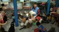 Hôpital pour chats malades au Pérou