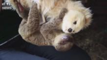 Un bébé paresseux et sa peluche