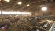 Languedoc-Roussillon : la grande distribution s'accorde avec les agriculteurs