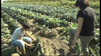 Le 20 heures du 1 octobre 2014 : Intemp�es dans l%u2019H�ult : un bilan catastrophique pour les agriculteurs - 956.98