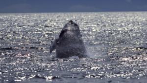 Une baleine dans l'océan
