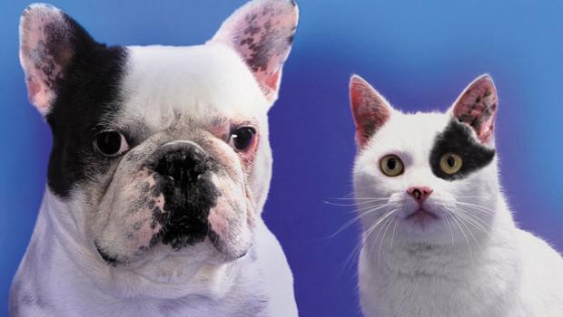 Le Code civil, dans son article 528, considère les animaux comme des biens meubles.