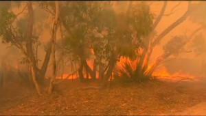 Le 13 heures du 4 janvier 2015 : L'Australie victime de feux de forêt géants - 489.533