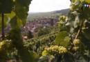 Sur la route des vins d'Alsace : Gueberschwihr