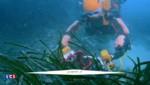 Ocean One, le robot humanoïde et archéologue qui exlore les fonds marins