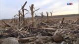 Un site Monsanto occupé brièvement par des militants anti-OGM dans l'Aube