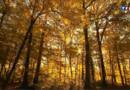 Forêts de France : les chênes d'exceptions de Tronçais