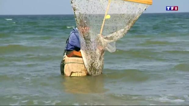 Pénurie de crevettes grises : une première qui fait flamber les prix
