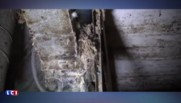 Poules pondeuses : une nouvelle vidéo de L214 dénonce leurs conditions d'élevage dans l'Ain