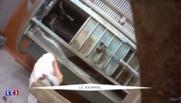 Trois abattoirs français mis à l'arrêt après les vidéos chocs de L214