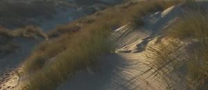 Français et Belges se côtisent pour préserver les Dunes de Flandre