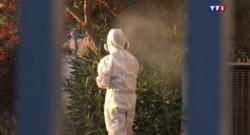 Le 13 heures du 31 juillet 2015 : En Corse, la bactérie Xylella fastidiosa progresse dangereusement - 937