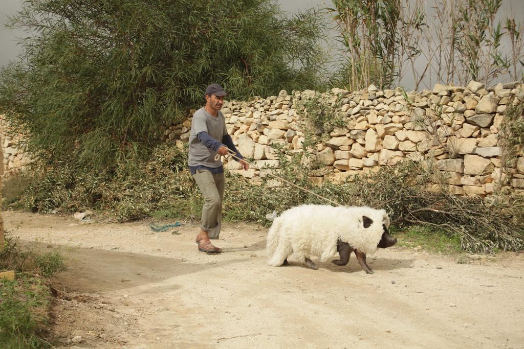 Le Cochon de Gaza de Sylvain Estibal