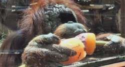 zoo animaux canicule glace sorbet rome