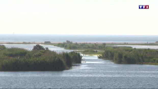 Découverte en terres catalanes (1/5) : le parc naturel du Delta de l'Ebre