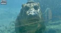 Un bébé hippopotame de 5 mois au zoo de San Diego