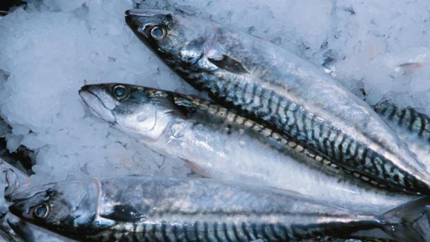 Des sardines sur un étal