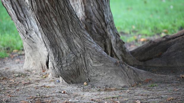 arbre forêt tronc nature parc