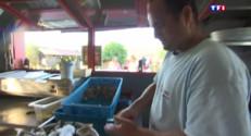 Le 13 heures du 31 juillet 2015 : Au Cap Ferret, les huîtres ravissent les papilles des vacanciers - 1476