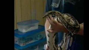 python serpent canada