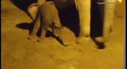 Une éléphante d'Afrique de 24 ans donne naissance à une petite femelle au zoo de Tucson