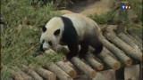 Le zoo de Beauval fermé, les pandas pas visibles avant le 18 février