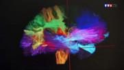 Le 13 heures du 14 mars 2014 : D�uvrez comment fonctionne votre cerveau, en images - 1154.783231048584