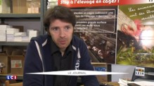 Poules déplumées, œufs couverts de poux : la vidéo choc de l'association L214