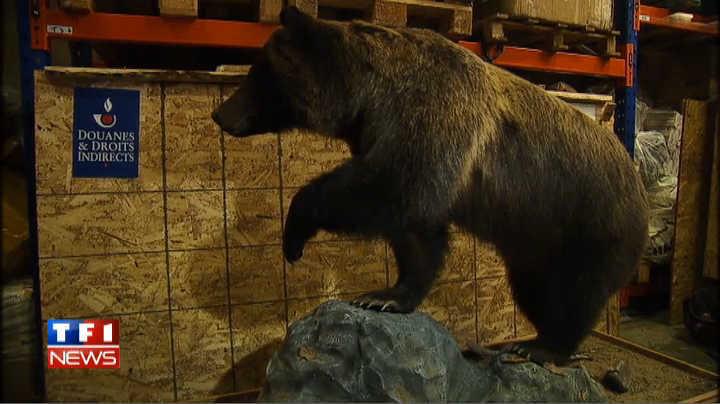 des centaines d animaux et objets issus d especes protegees saisis. Black Bedroom Furniture Sets. Home Design Ideas