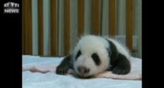 La bouille de ce bébé panda ne vous laissera pas insensible...