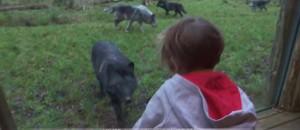Dormir avec les loups ou percher dans une cabane : ces hébergements insolites