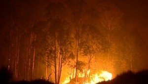 australie feu de forêt