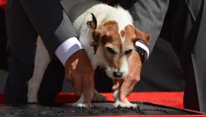 Le chien de The Artist, Uggie, qui laisse ses empreintes sur Hollywood Boulevard