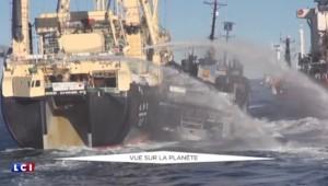Recherché par Interpol, l'écologiste Paul Watson raconte comment il tente de sauver les océans
