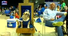 Les Etats-Unis élisent le plus beau bulldog du monde