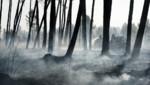 Pompiers luttant contre le feu à Saint-Jean d'Illac, en Gironde, 26/7/15