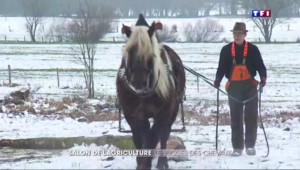 Le cheval de trait, l'autre star du salon de l'agriculture