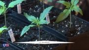 Après Taubira et Duflot, Le Guen monte au créneau pour dépénaliser le cannabis