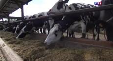 Charente : des agriculteurs mettent en vente leurs vaches … sur Le Bon Coin !