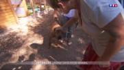 Les animaux en vacances, un casse-tête pour les propriétaires