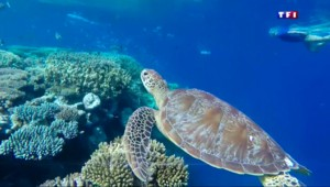 Le lagon de Mayotte : paradis naturel préservé