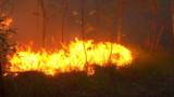 300 hectares détruits par les flammes près de Lacanau