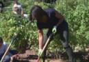 michelle obama potager jardinage